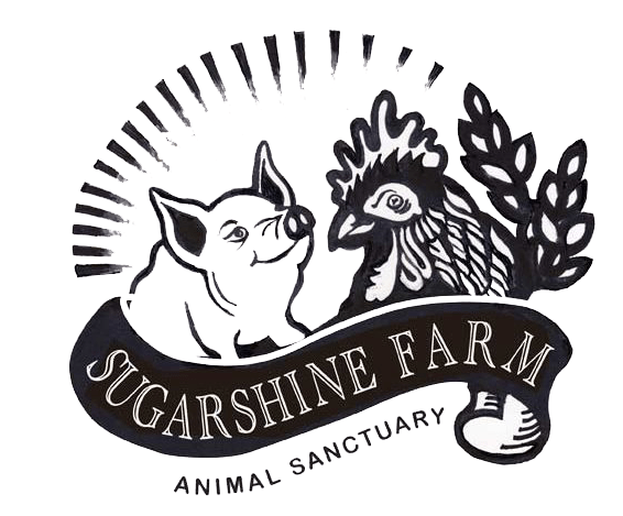 Sugarshine Farm